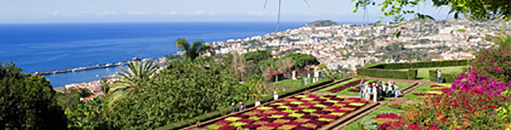 Madeira Winter Sun